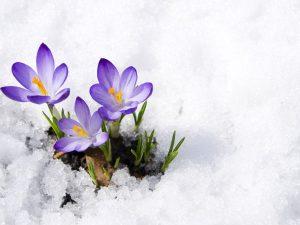 soğuk hava çiçekleri