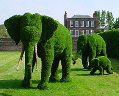 Çimlerle fil