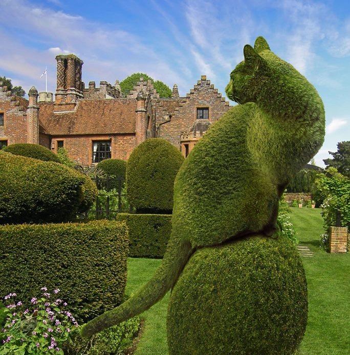 Topiary Kedi