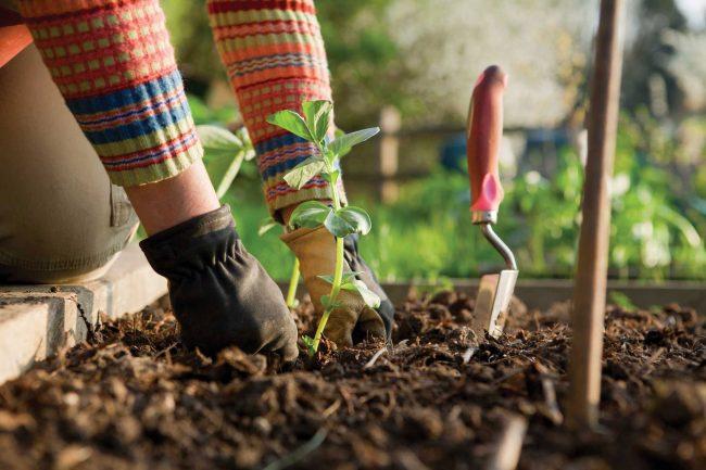bahar bahçe bakımı