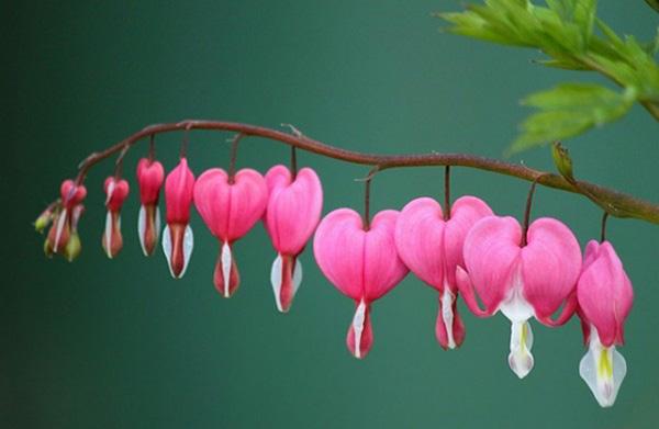 Dünyanın En Güzel çiçekleri Seçildi Dünyanın En Güzel 25 çiçeği