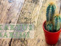 kaktus-bakimi-nasil-yapilir