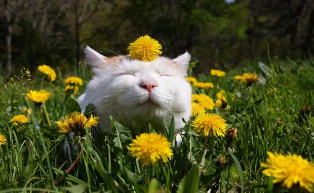Bahçede kedi beslemek