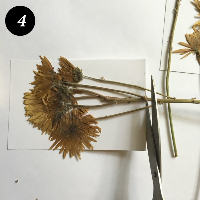 kuru çiçekleri çerçevelemek adım 5