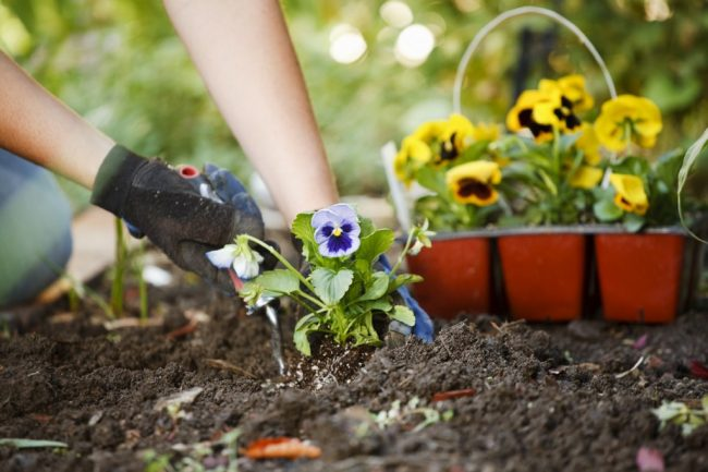 mart ayında bahçe bakımı
