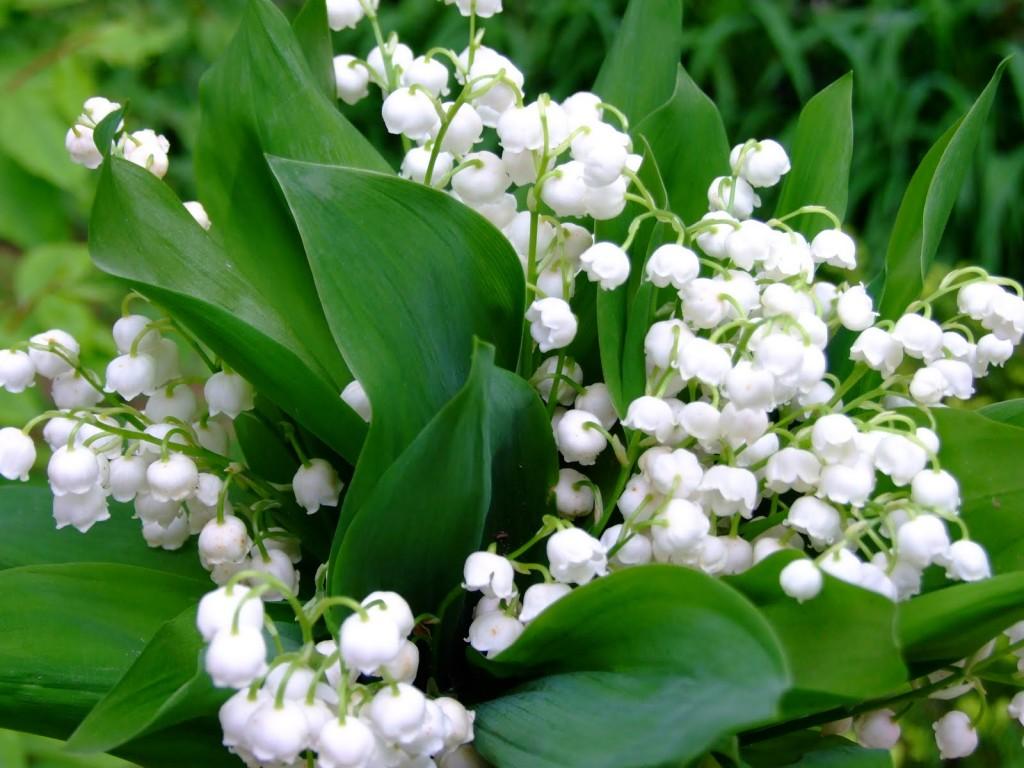 Saksıda Açan Çiçekler Lif Modeli