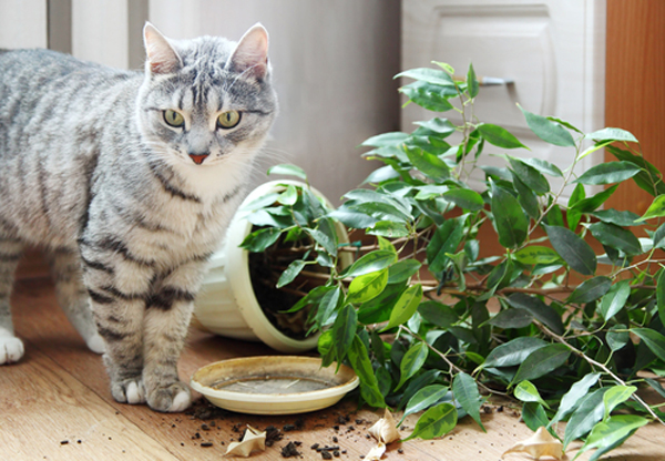 saksı deviren kedi