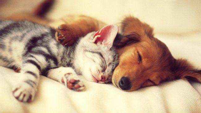 uyuyan kedi ve köpek