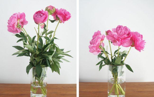 vazo çiçeği bakımı