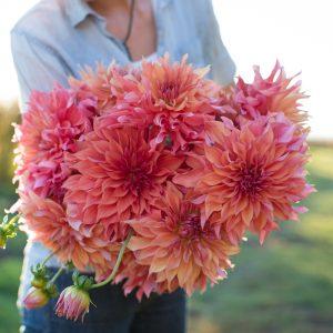 yıldız çiçeği buketi