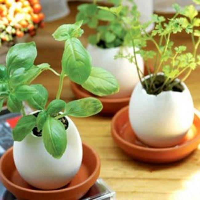yumurta şekilli saksı