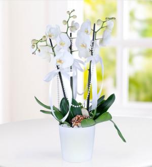 3-dal-beyaz-orkide