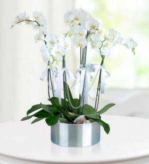 5-dalli-beyaz-orkide