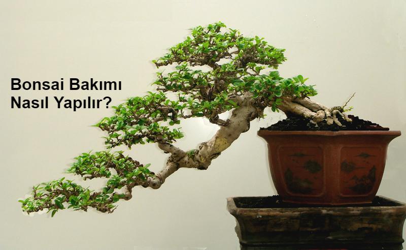 Baharda budama ağaçları: Nereden başlamalı
