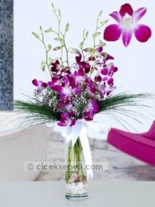 singapur orkidesi 1