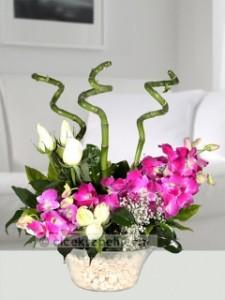 singapur orkidesi 3