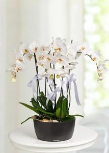 beyazlar-icinde-orkide-at2407-1-4