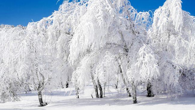 kar yağmış ağaç dalları
