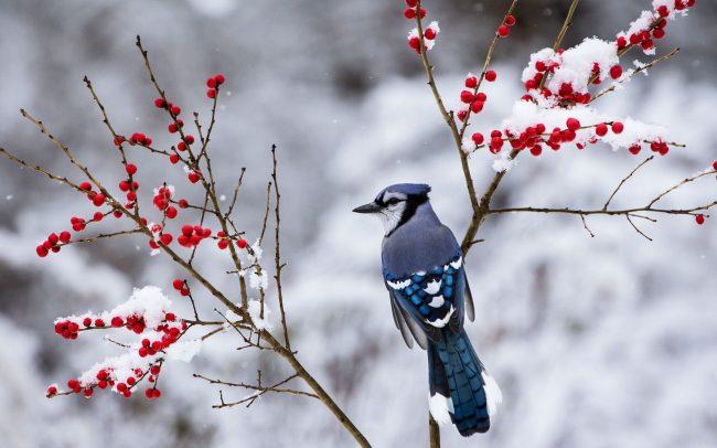 karda dala konan kuş
