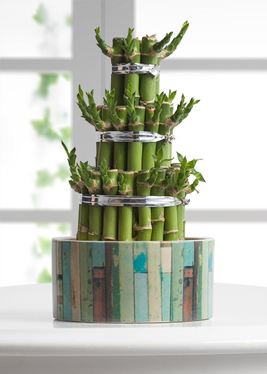 lucky-bamboo-at2446-1-5
