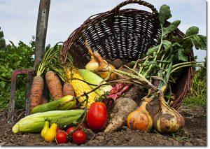 doğal sebze ve meyve