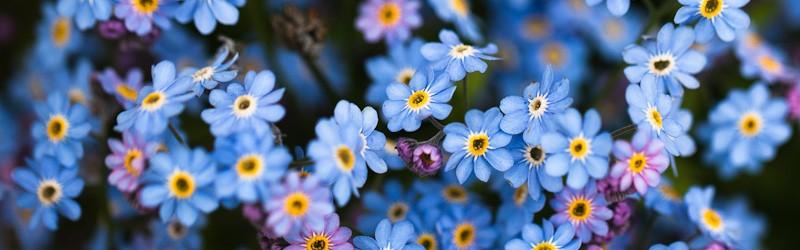 çiçek ile ilgili görsel sonucu