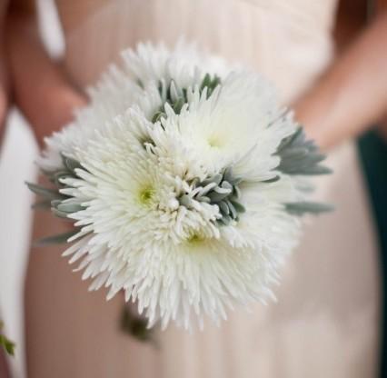 disbud gelin çiçeği