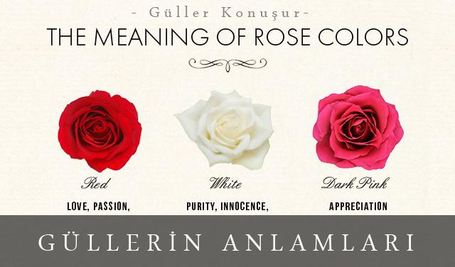 güller ve anlamları