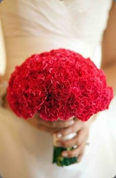 kırmızı karanfil gelin çiçeği