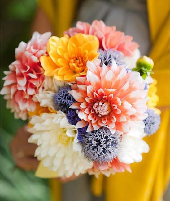 kasımpatı gelin çiçeği