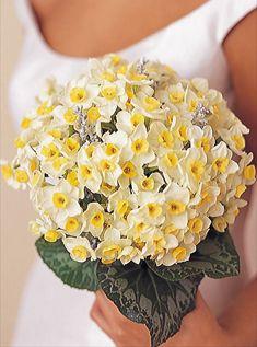 nergis gelin çiçeği