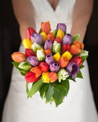 rengarenk laleler gelin çiçeği