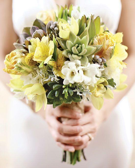 sarı aster gelin çiçeği