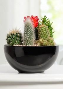 seramik-saksida-egzotik-kaktus-aranjmani-at2448-1-9