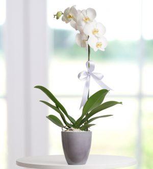 mutlu-yarinlar-orkide-aranjmani-at2756-1-1