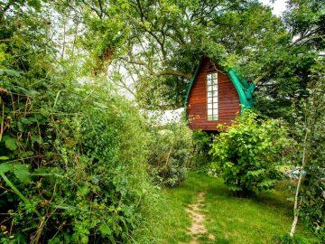tree-sparrow-house-cornwall