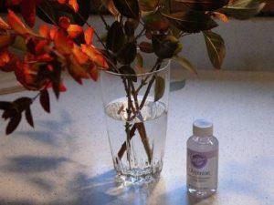 Gliselin ile Çiçek Kurutma