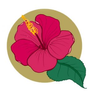 hibiskus çiçeği