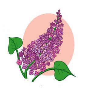 leylak çiçeği