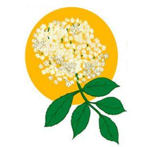 mürver çiçeği