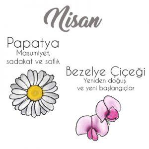 papatya ve bezelye çiçeği