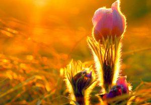 bitki için güneş