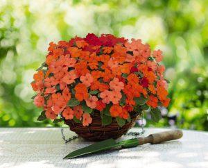 kırmızı turuncu somon cam güzeli