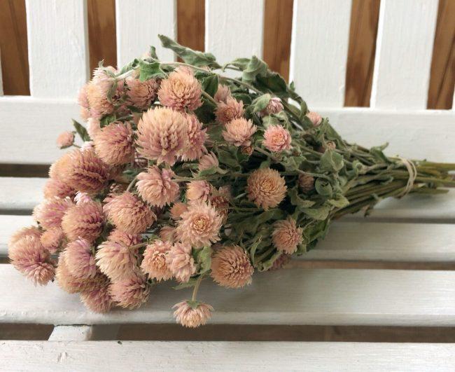 kuru medine çiçeği