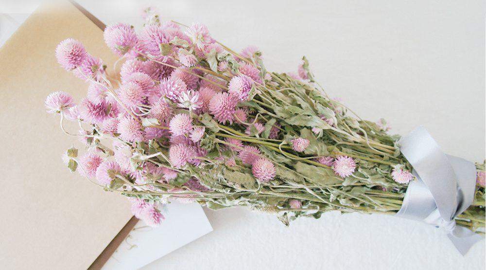 medine çiçeği kurusu