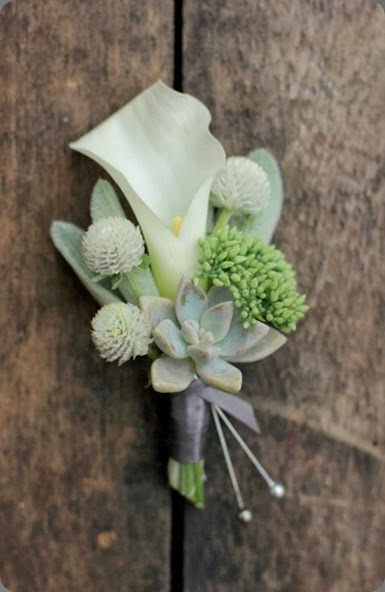 medine çiçeği yaka çiçeği