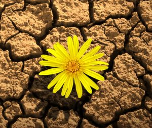 kurumuş toprak