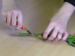 çiçek sapını kesmek