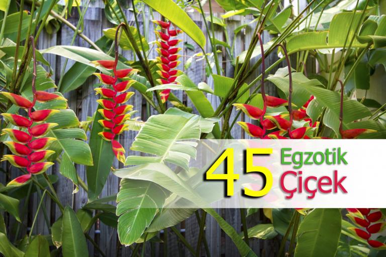 Renkleri Ile Ruhunuzu Hareketlendirecek 45 Egzotik çiçek