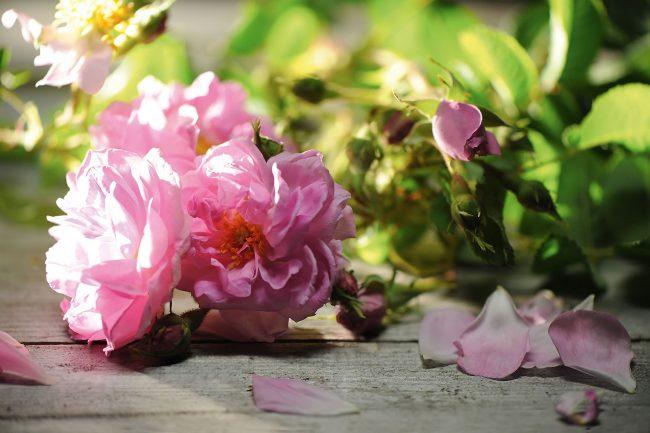 ısparta gülleri